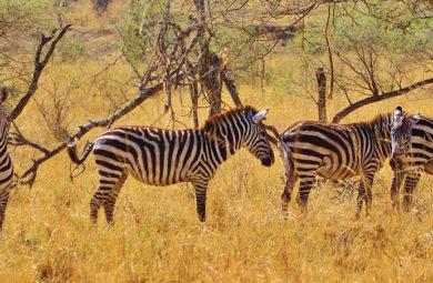 la nature en Tanzanie